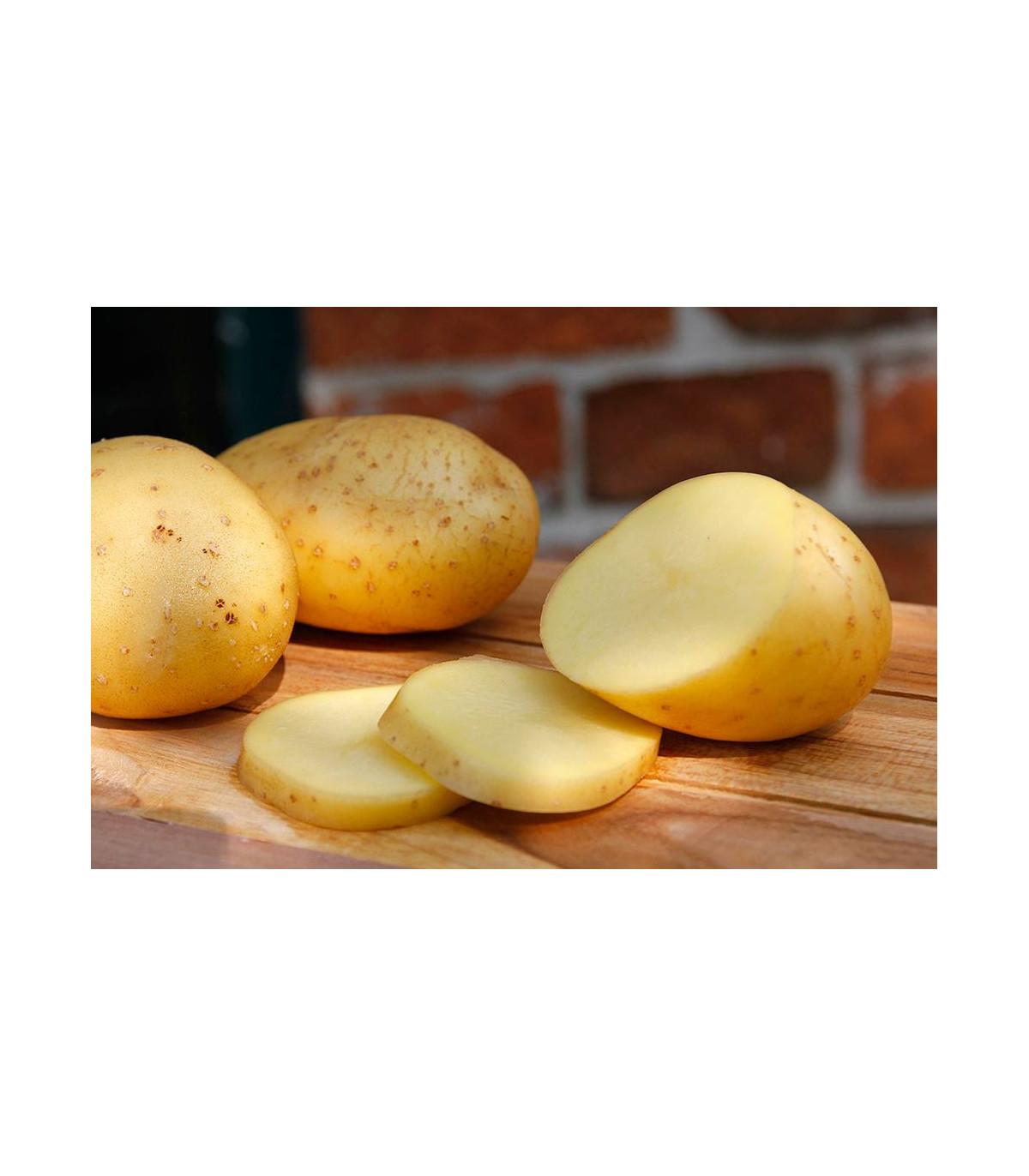BIO sadbové zemiaky Belana - Solanum tuberosum - Kiepenkerl - 10 ks